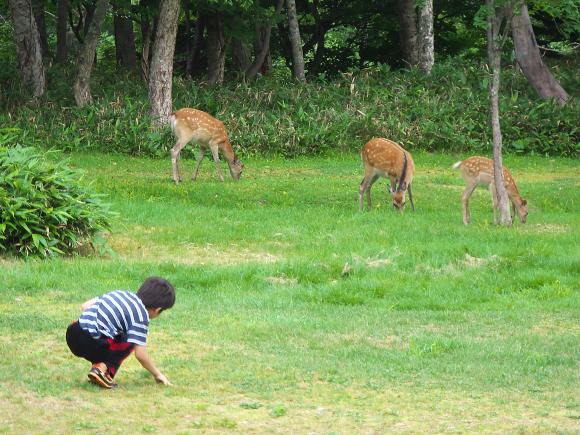 f:id:nijinotsumiki:20110814204821j:image