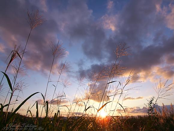 f:id:nijinotsumiki:20110823181915j:image
