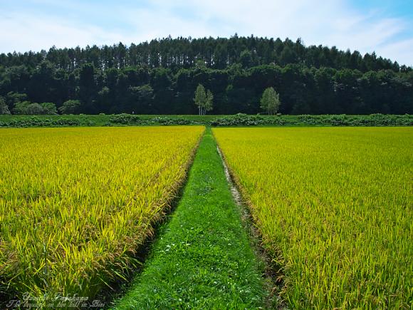 f:id:nijinotsumiki:20110828200816j:image