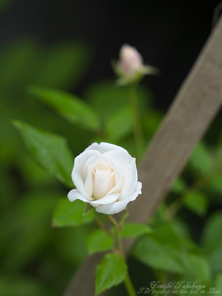 f:id:nijinotsumiki:20110903063513j:image
