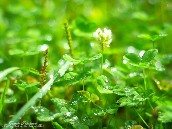 f:id:nijinotsumiki:20110904092809j:image