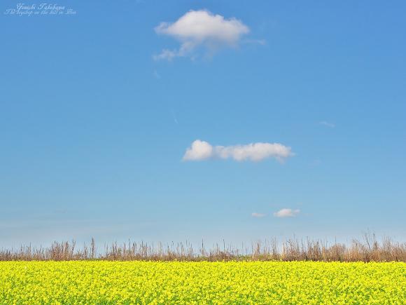 f:id:nijinotsumiki:20110914171453j:image