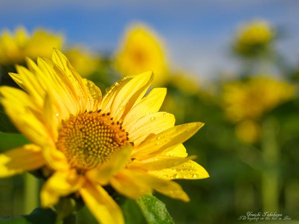 f:id:nijinotsumiki:20111001172505j:image