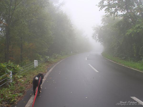 f:id:nijinotsumiki:20111007124738j:image