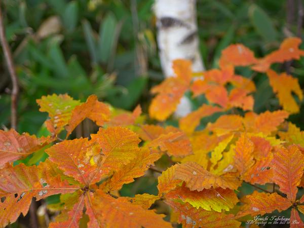 f:id:nijinotsumiki:20111014131510j:image