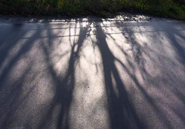 f:id:nijinotsumiki:20111107221552j:image