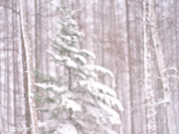 f:id:nijinotsumiki:20111121124222j:image