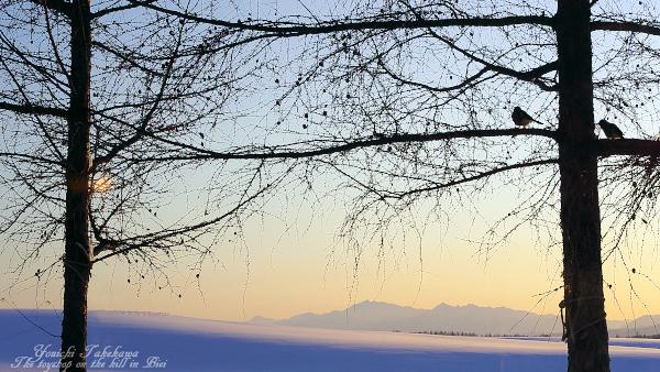 f:id:nijinotsumiki:20111124084706j:image