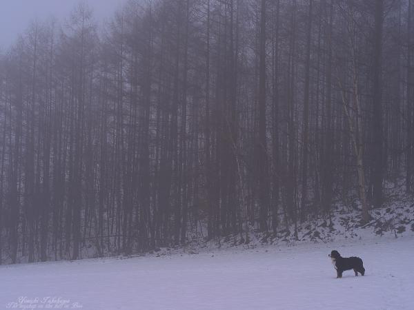 f:id:nijinotsumiki:20111129114044j:image