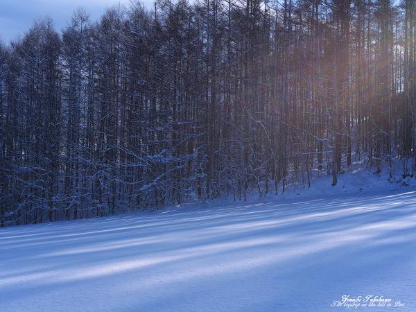 f:id:nijinotsumiki:20111216194657j:image