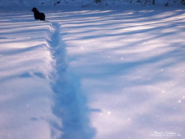 f:id:nijinotsumiki:20111220220553j:image