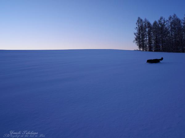 f:id:nijinotsumiki:20111231191042j:image