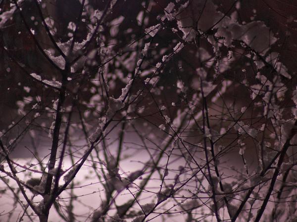 f:id:nijinotsumiki:20120106173858j:image