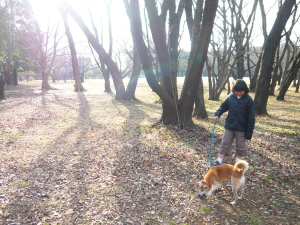 f:id:nijinotsumiki:20120117101748j:image