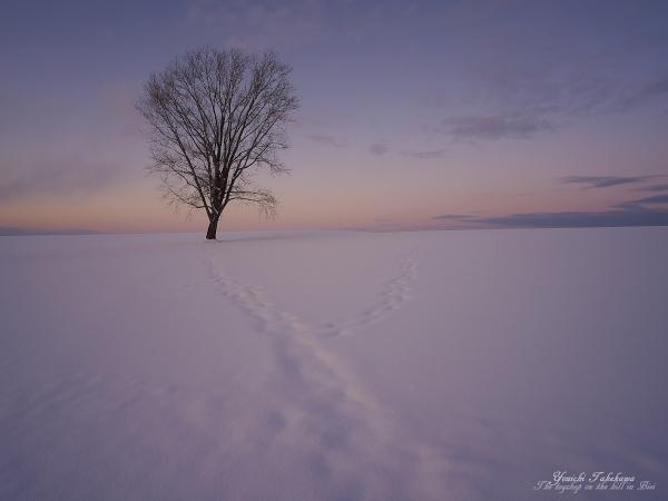 f:id:nijinotsumiki:20120118060428j:image
