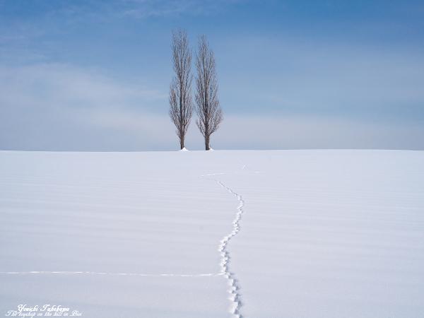 f:id:nijinotsumiki:20120123180039j:image