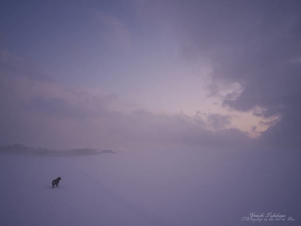 f:id:nijinotsumiki:20120208051349j:image