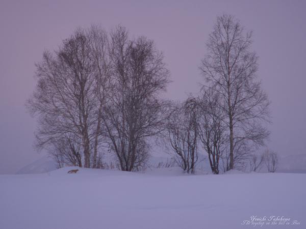 f:id:nijinotsumiki:20120217174152j:image
