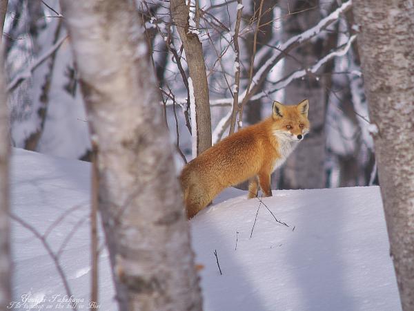 f:id:nijinotsumiki:20120223063439j:image