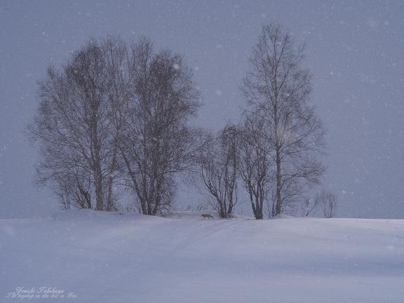 f:id:nijinotsumiki:20120229175826j:image