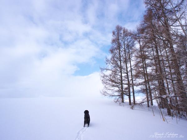 f:id:nijinotsumiki:20120308124705j:image