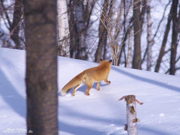 f:id:nijinotsumiki:20120310100602j:image