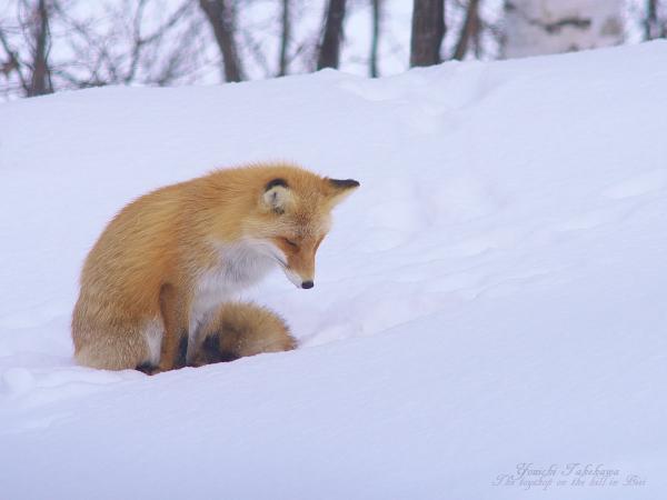 f:id:nijinotsumiki:20120310100603j:image