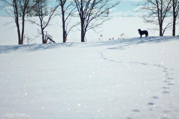 f:id:nijinotsumiki:20120408203753j:image