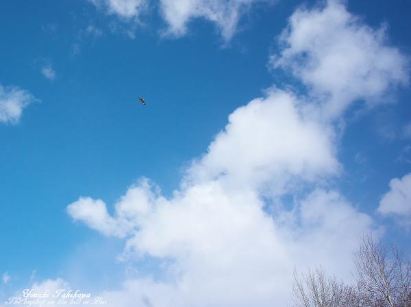 f:id:nijinotsumiki:20120429214527j:image