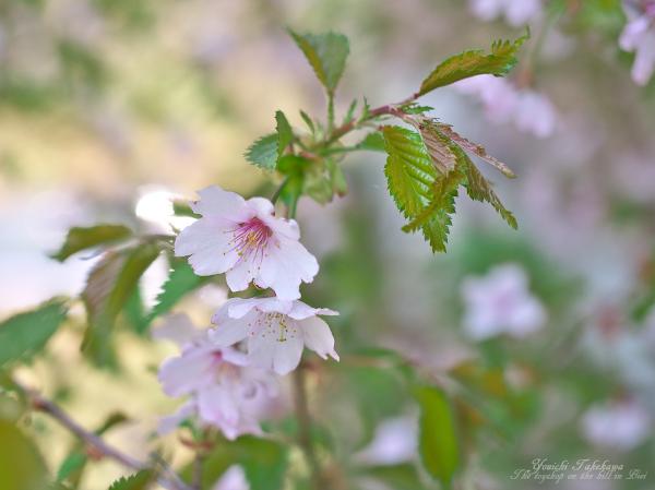 f:id:nijinotsumiki:20120505194410j:image