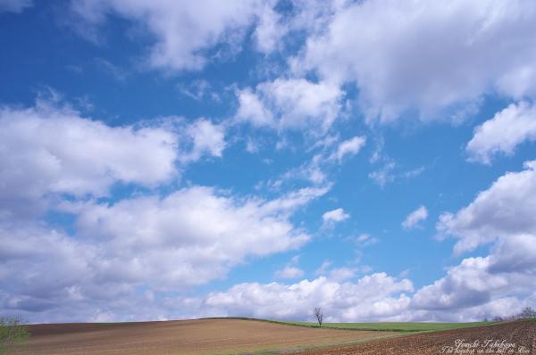 f:id:nijinotsumiki:20120508210951j:image