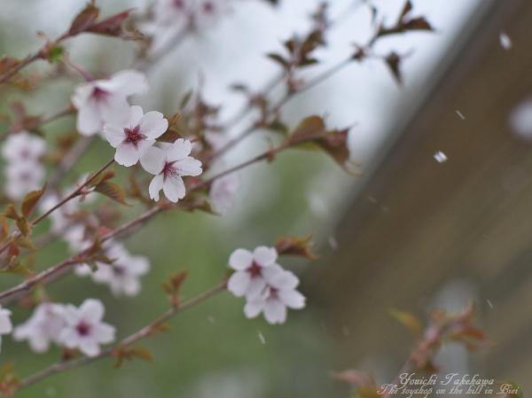 f:id:nijinotsumiki:20120512203759j:image