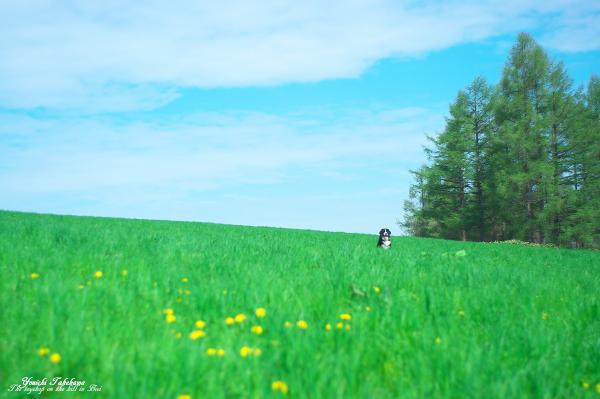 f:id:nijinotsumiki:20120530082138j:image