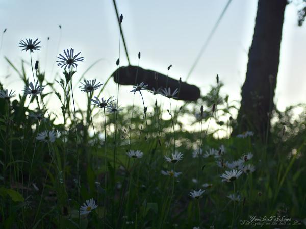 f:id:nijinotsumiki:20120627211825j:image