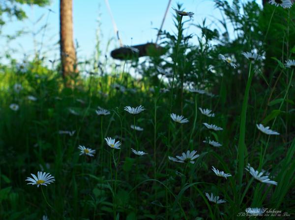 f:id:nijinotsumiki:20120627211826j:image