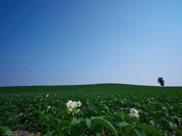 f:id:nijinotsumiki:20120701193855j:image