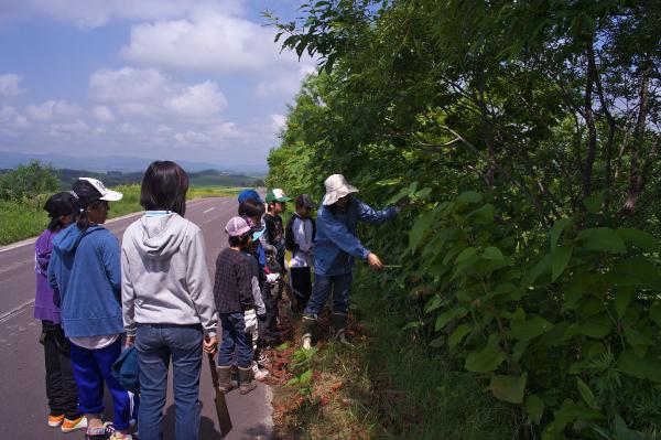 f:id:nijinotsumiki:20120708002535j:image