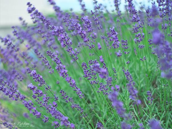 f:id:nijinotsumiki:20120711211136j:image