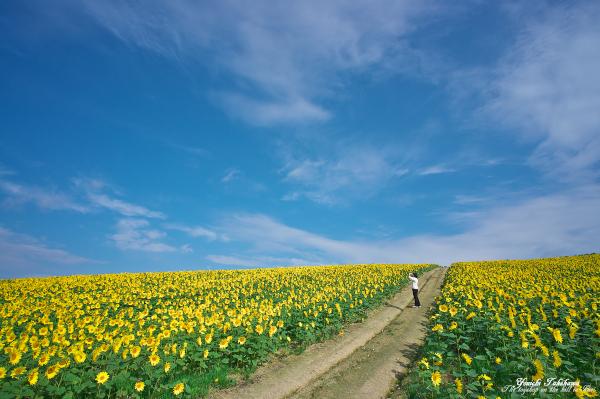 f:id:nijinotsumiki:20121006224735j:image