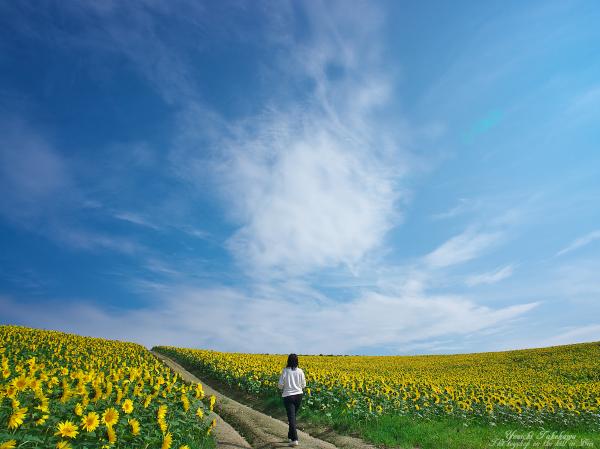 f:id:nijinotsumiki:20121006233039j:image