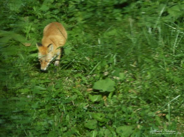 f:id:nijinotsumiki:20121009134644j:image