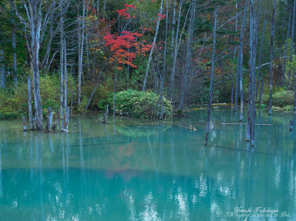 f:id:nijinotsumiki:20121018201605j:image
