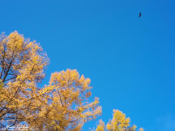 f:id:nijinotsumiki:20121111212300j:image
