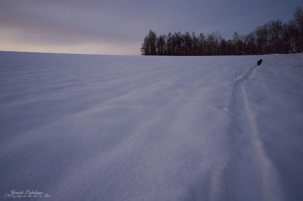 f:id:nijinotsumiki:20121203204713j:image