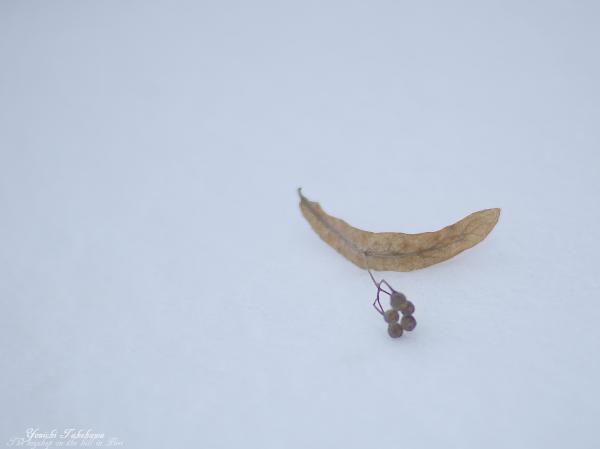 f:id:nijinotsumiki:20121213183613j:image