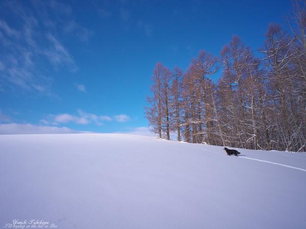 f:id:nijinotsumiki:20130317215535j:image