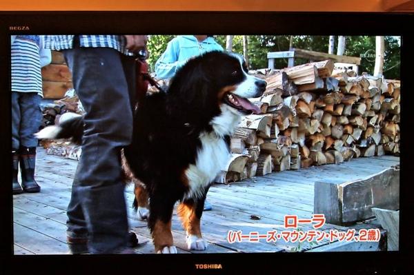 f:id:nijinotsumiki:20130808143810j:image
