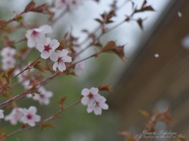 f:id:nijinotsumiki:20140518235716j:image