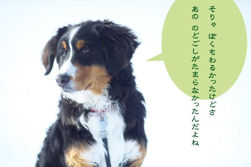 f:id:nijinotsumiki:20170308053722j:plain