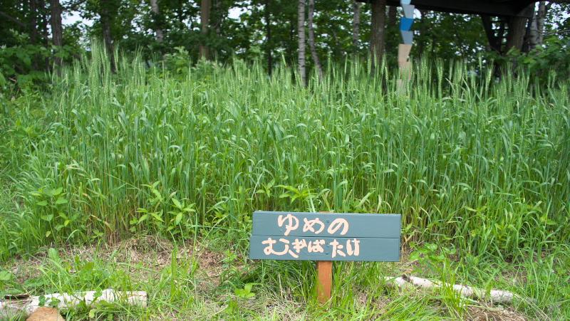 f:id:nijinotsumiki:20180708083054j:plain